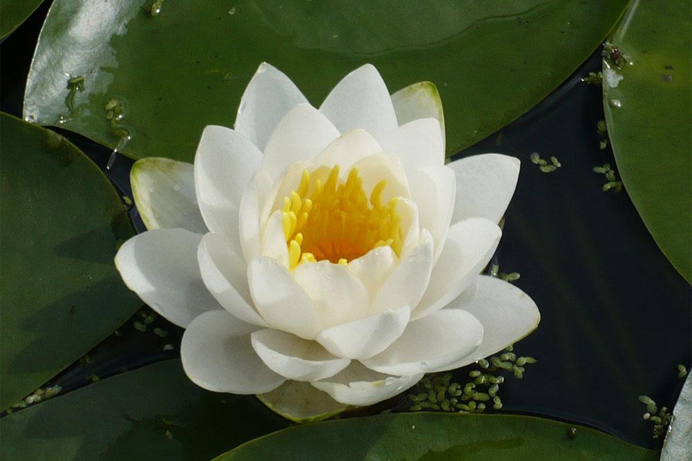Actu Qi Gong - Méditation Rhizome